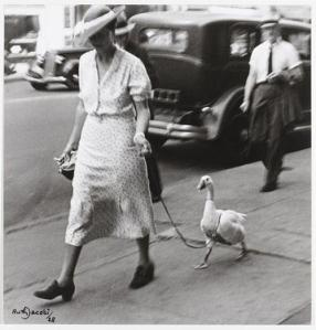 Goose Newyork 1928